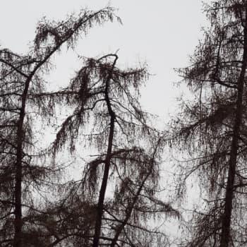 Luontoretki.: Vaikea valokuvatehtävä