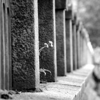 Viikon sitaatti: Kuollutta kiertämässä
