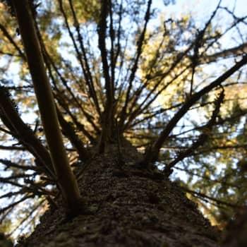 Vad hände med avverkningen av skogen?