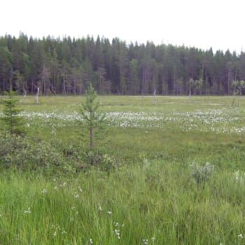 Vuotoksen allas ponnahti taas julkisuuteen, kun Lapin liitto lähetti maakuntakaavaehdotuksen lausuntokierrokselle.