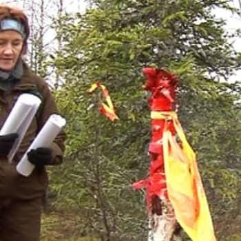 Pudasjärven luonnonsuojeluyhdistyksen puheenjohtaja Pirkko-Liisa Luhta ihmettelee, että kuinka voi olla
