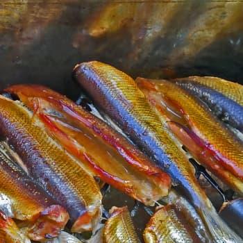 Luonto-Suomen kalaruokailta
