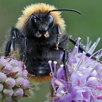 Hämmästyttävät hyönteiset