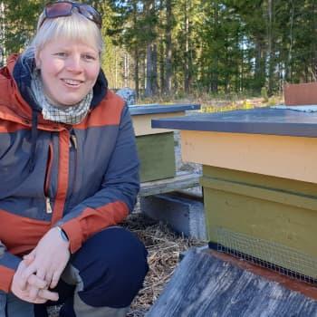 Pistä mehiläiset pölytyshommiin puutarhassasi
