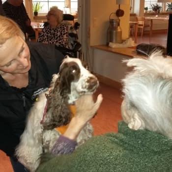 Kompishundarna Ayda och Fille sprider glädje bland äldre i Raseborg
