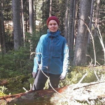 Uhanalaisia kääpiä istutetaan puihin