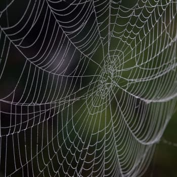 Hämähäkkien seitit näkyvissä