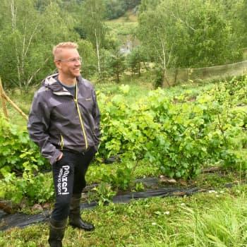 Ville Salmi viljelee viiniä Perttelissä Uskelanjoen lounaisrinteillä