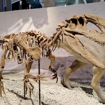 Luokkaretkisesonki on kuumimmillaan – dinosaurukset ja tiede kiinnostavat oppilaita