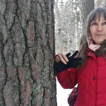 Luonnonperintösäätiö suojelee metsiä