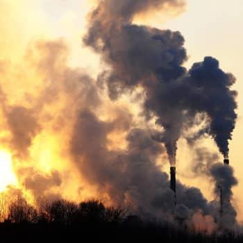 Hiilinielut ja metsien hakkuut - miten metsäisessä Suomessa tehdään kestävää ilmastopolitiikkaa?