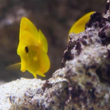 Markus Dernjatin teki Uuden lastensairaalan potilaille oman koralliriutan