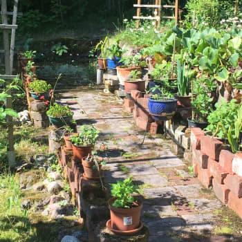 Sari Suhola hyödyntää puutarhassaan kierrätysmateriaaleja