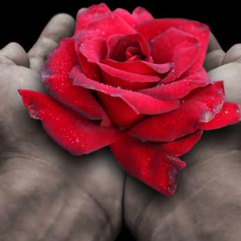 Laulu tulipunaisesta kukasta