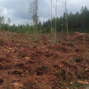 Metsäradio.: Kai Fagerströmin tarina metsästä