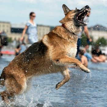YleX Etusivu: Kaikenkarvainen kansa – Miten koirista tuli miljoonabisnes -kirjan tekijät: Koiraa hankkivan on aina hyvä tietää mistä koira tulee.