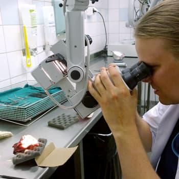 Aspekti: Mikrokirurgia: ammattitaitoiset ja turvalliset kädet