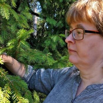 Metsäradio.: Geenireservimetsä on geenipankki