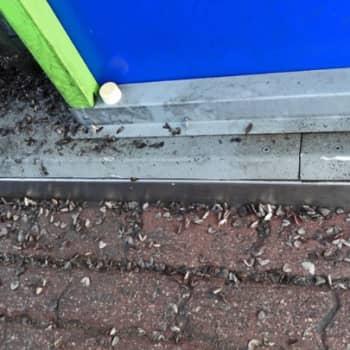 Luonto-ohjelmista poimittua: Kuolleita perhosia bensa-asemalla