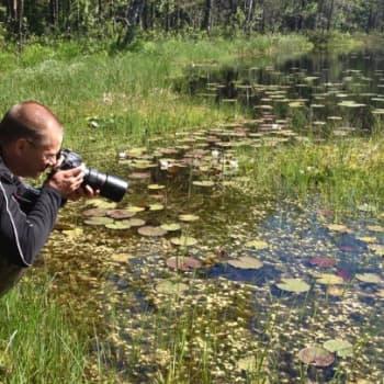 Minna Pyykön maailma: Sudenkorentoja Suomen suvessa