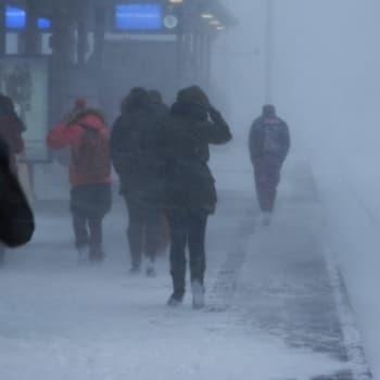 Luonto-Suomi.: Pihan pikkulintuja lumituiskussa
