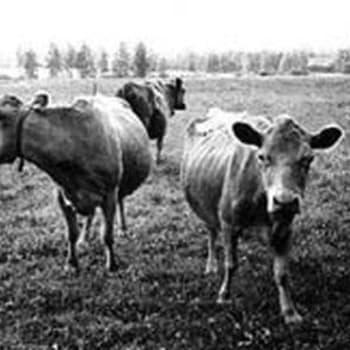 Maatalouden kehitysmahdollisuudet (1966)
