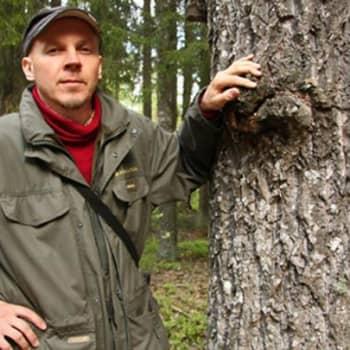 Metsäradio.: Seitsemisen kansallispuistossa 4.7.2011