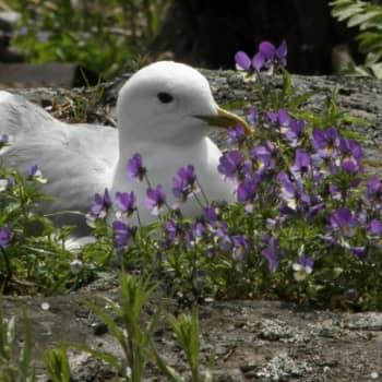 Luonto-Suomi.: Luonto herää kevääseen. Osa 2