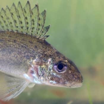 Miten kuvata kaloja akvaariossa?