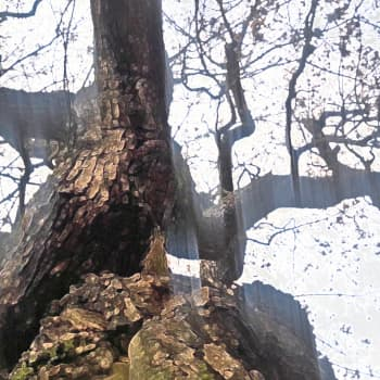 Vanhan puun varjossa