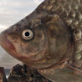 Kalojen talvi