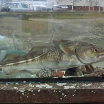 Luontoretki.: Miten otetaan hyvä kalavalokuva?