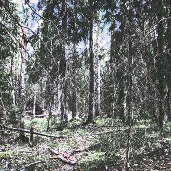 Luonto-Suomi.: Metsäilta