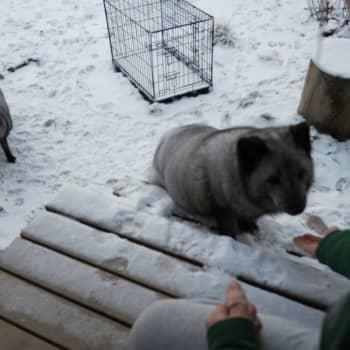 Jokapaikan Reetta: Eläinsuojelukeskus Tuulispäässä Somerolla