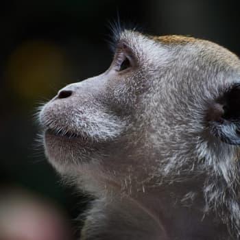 Darwin loi pohjan modernille biologialle