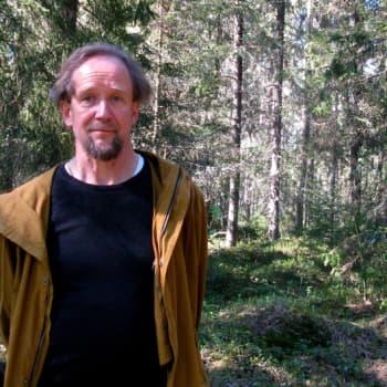 Minna Pyykön maailma: Metsän arkkitehtuuri