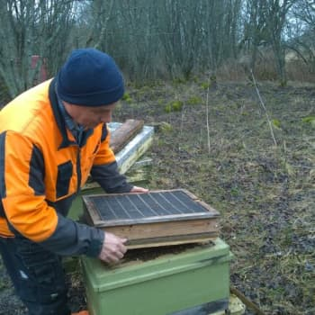 Sunnuntaivieras: Mehiläistarhaaja on tahtomattaan myös meteorologi
