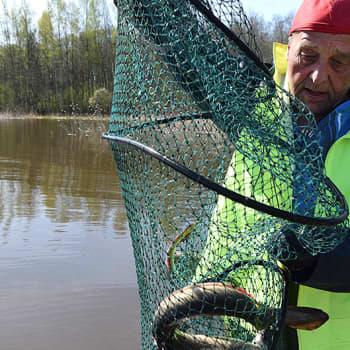 Sunnuntaivieras: Mies, jolle sisävesilaivatkin toitottavat torveaan