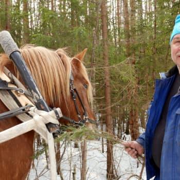 Jokapaikan Reetta: Rautalammilla työhevosen kanssa metsätöissä