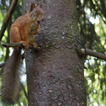 Luonto-Suomi.: Oravailta