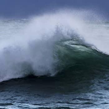 Luontoretki.: Myrskyn merkitys luonnossa