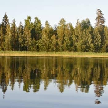 Luontoretki.: Saapunkijärven kalansaaliita