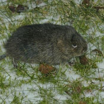 Luontoretki.: Vesimyyrien talvipiilo