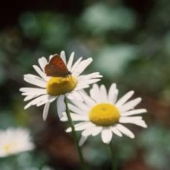 Luontoretkien luonnontuntemus on vaihtunut ympäristökasvatukseen