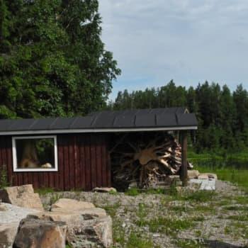 Metsäradio.: Haapapuun harvinainen kasvuhäiriö