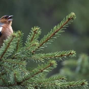Luonto-Suomi.: Luonto-Suomen luontoäänite-ilta