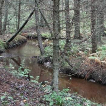 Luontoretki.: Taimenet kutevat