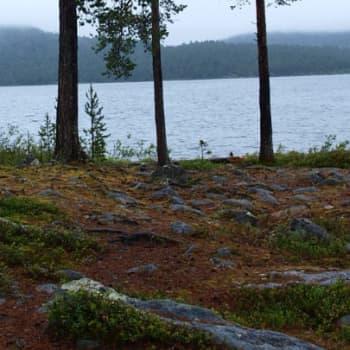 Metsäradio.: Luonnonrauhasta lääke stressaantuneelle