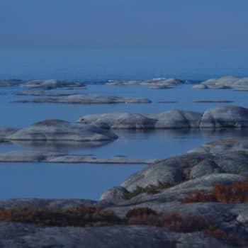 Kevät lintusaarella: Arktikasta turha haaveilla