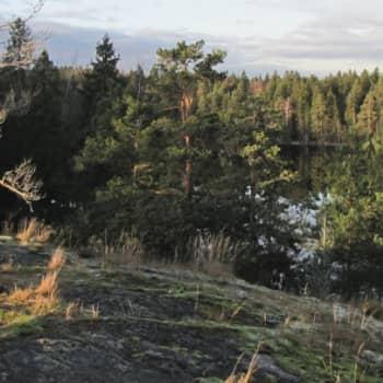 Minna Pyykön maailma: Jussi Kiven seikkailujen metsä 10.12.2011